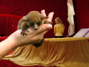 a hand holding a bush baby is extended toward a prostitute on a bed