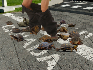 Man surround by turtles stands on Canadian border with pants down