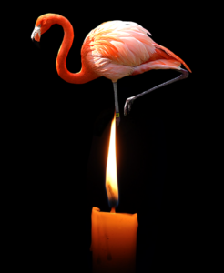 a pink flamingo stands behind a dim candle